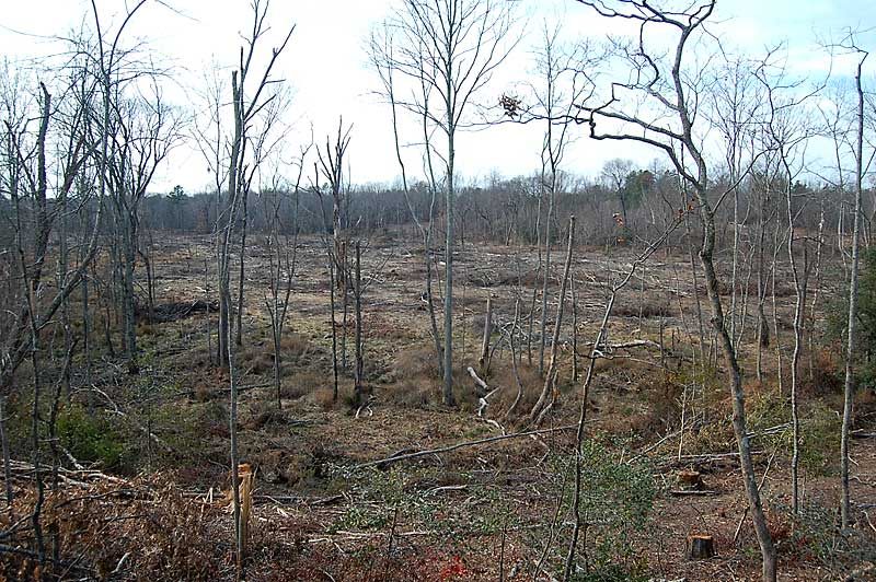 Warren County North Carolina Timber And Hunting Land