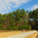 north carolina consulting forestry & real estate