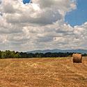 burke county farm for sale