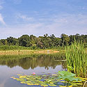 chatham county land with pond for sale
