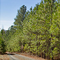 land for sale chatham county