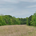 davidson county land for sale