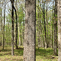 uwharrie mountain land for sale