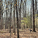 land for sale in forsyth county
