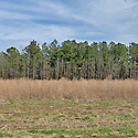 pender county farm for sale