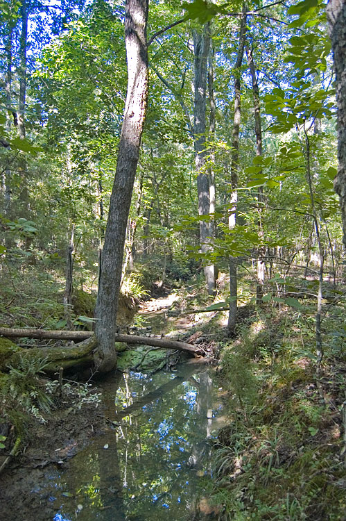 Timberland For Sale 36 Acres Person County North Carolina