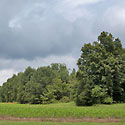 land for sale walnut cove