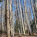 hardwood timberland for sale