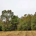 timber and hunting land for sale