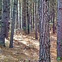 yadkin county timberland for sale